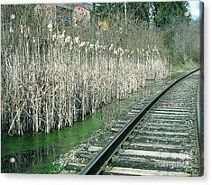 Cattails By The Tracks Acrylic Print