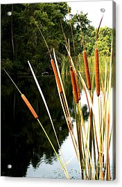 Cattails On The River Bank Acrylic Print