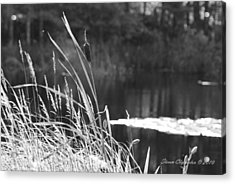 Cattails Acrylic Print by Steven Clipperton