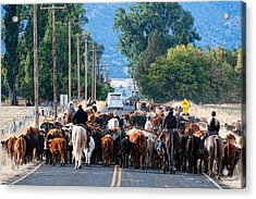 Acrylic Print featuring the photograph Cattle Drive by Gary Rose