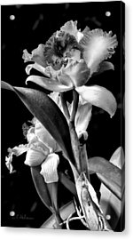 Cattleya - Bw Acrylic Print by Christopher Holmes
