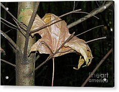 Caught In Fall Acrylic Print by Laurel Thomson