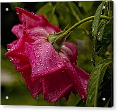 Caught In The Rain Acrylic Print by Barbara Middleton