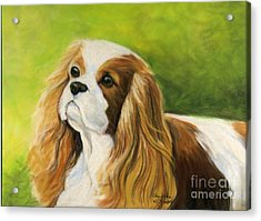 Cavalier King Charles Spaniel  Acrylic Print by Charlotte Yealey