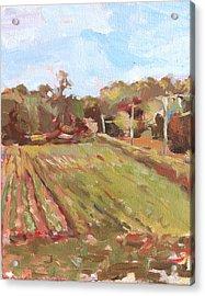 Cedar Creek Corn Acrylic Print by Jenny Anderson
