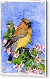 Cedar Waxwing In Spring Acrylic Print by Eunice Olson