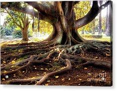 Centenarian Tree Acrylic Print by Carlos Caetano