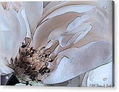 Centerfold Acrylic Print by Susan Smith