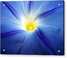 Acrylic Print featuring the photograph Centerpiece  Blue Morning Glory by George Bostian