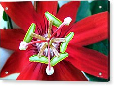 Acrylic Print featuring the photograph Centerpiece  Passion Flower 001 by George Bostian