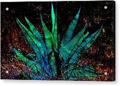 Century Plant Acrylic Print
