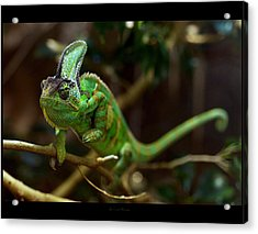 Chameleon Acrylic Print by 1d110