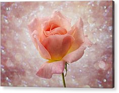 Champagne Rose. Acrylic Print by Clare Bambers