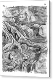 Charcoal Drawing Of Gnarled Pine Tree Roots In Swampy Area Acrylic Print by Adam Long