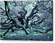Charleston's Angel Oak Acrylic Print