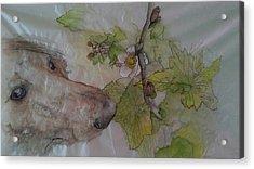 Charlie Smells The Berry Bush Acrylic Print