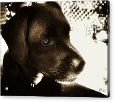 Charlie Acrylic Print by Steve Buckenberger
