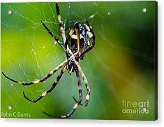 Charlotte's Web Acrylic Print by John Burns
