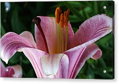 Charming Lily Acrylic Print by Bruce Bley