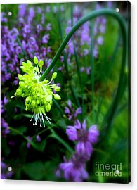 Chartreuse Acrylic Print by Maria Scarfone