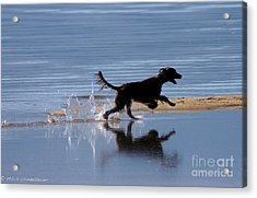 Acrylic Print featuring the photograph Chasing Reflections by Mitch Shindelbower