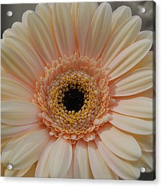 Cheeriest Flower Acrylic Print by JAMART Photography