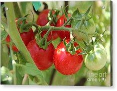 Cheery Tomatoes Acrylic Print