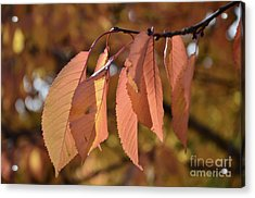 Acrylic Print featuring the photograph Cheery Tree Sheets 1 by Bruno Santoro