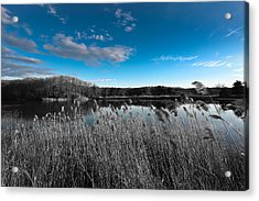 Cheesequake State Park Acrylic Print
