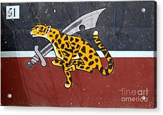 Cheetah 51 Acrylic Print by Unknown