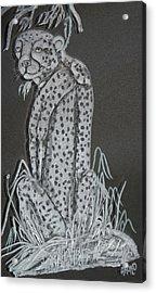 Cheetah Acrylic Print by Akoko Okeyo