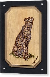 Cheetah Acrylic Print by Clarence Butch Martin