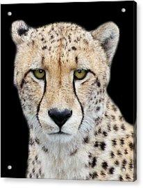 Acrylic Print featuring the photograph Cheetah by Lynn Bolt