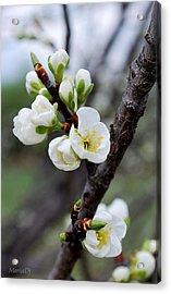 Acrylic Print featuring the photograph Cherries To Be... by Marija Djedovic