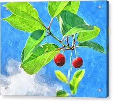 Cherry Berries Acrylic Print by Aleksandr Volkov