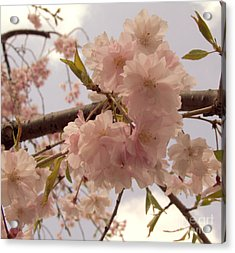 Acrylic Print featuring the photograph Cherry Blossom 2 by Andrea Anderegg