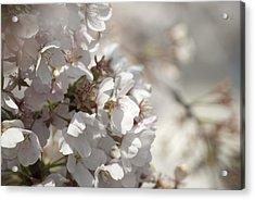Cherry Blossom 2 Acrylic Print by Lisa Missenda