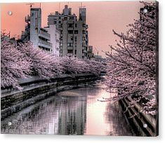 Cherry Blossom Acrylic Print by Akirat2011, All Right Reserved.