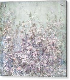 Cherry Blossom Grunge Acrylic Print by Paul Grand