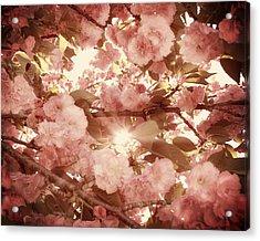 Cherry Blossom Sky Acrylic Print by Amy Tyler