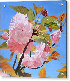 Cherry Blossom Time Acrylic Print by Leah Hopkins Henry