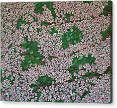 Cherry Blossoms Acrylic Print by Karen Alonge