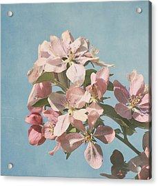 Cherry Blossoms Acrylic Print by Kim Hojnacki