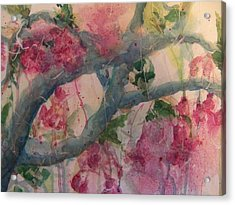 Cherry Blossoms Acrylic Print by Sandy Collier