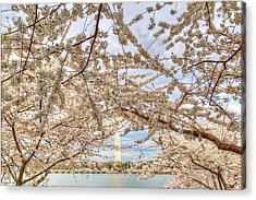 Cherry Blossoms Washington Dc 3 Acrylic Print by Metro DC Photography