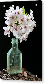 Cherry Green Acrylic Print by JC Findley