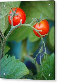 Cherry Acrylic Print by Miranda Mehrer