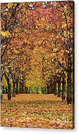 Acrylic Print featuring the photograph Cherry Tree Plantation by Bruno Santoro