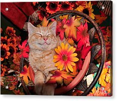 Cheshire Cat Dreaming Of Catching Mice Acrylic Print by Chantal PhotoPix