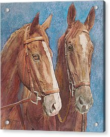 Acrylic Print featuring the painting Chestnut Pals by Richard James Digance
